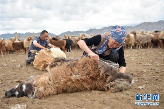 (图片故事)(13)走近哈萨克族牧民的转场生活