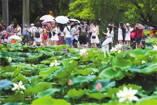 端午假期深圳91万人公园打卡