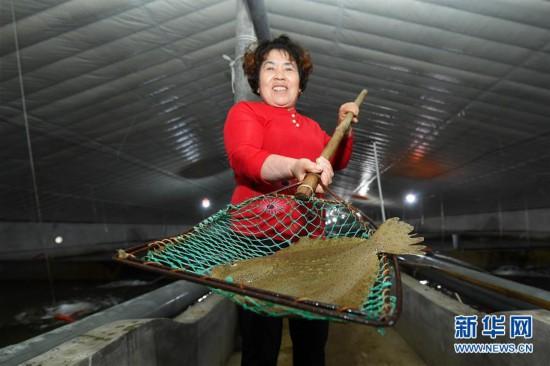 (经济)(1)河北乐亭:发展海产品养殖产业