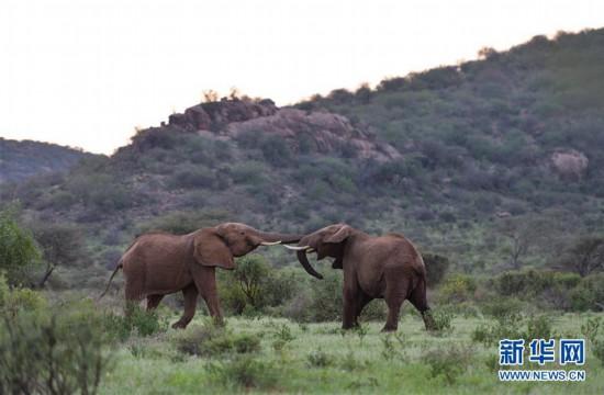 (国际)(6)初见肯尼亚桑布鲁国家公园