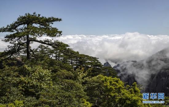 黄山:山峦滴翠 云烟竞秀