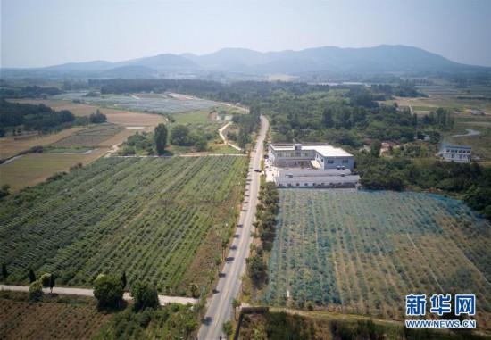 """南京溧水:一条柏油路串出""""蓝莓经济"""""""