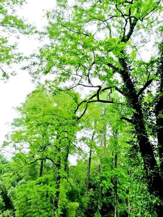 古训守护绿宝藏 青山迸发新希望