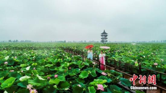 航拍江西南昌千亩荷花绽放 游客漫步雨中赏花拍照