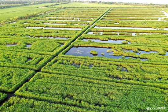 威海:夏日湿地美如画