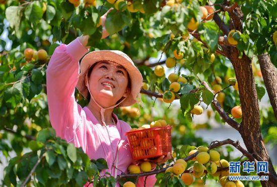 (經濟)(4)河北唐山:融合發展助力鄉村振興