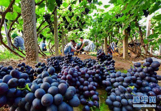 (經濟)(2)河北唐山:融合發展助力鄉村振興