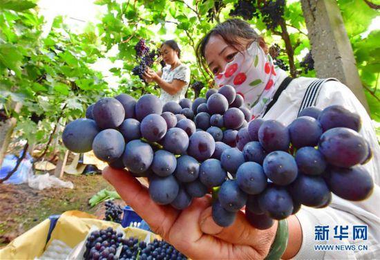 (經濟)(3)河北唐山:融合發展助力鄉村振興