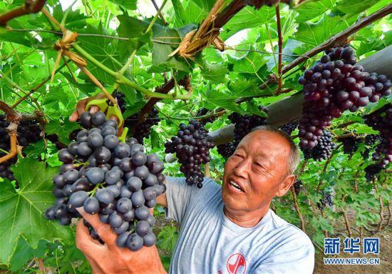 (經濟)(1)河北唐山:融合發展助力鄉村振興