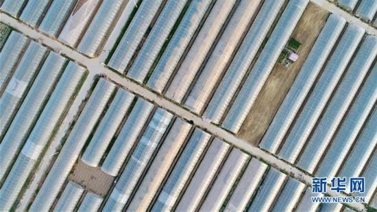 (经济)(3)河北内丘:设施农业助推乡村振兴