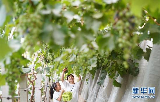 河北内丘:设施果蔬产业助推乡村振兴