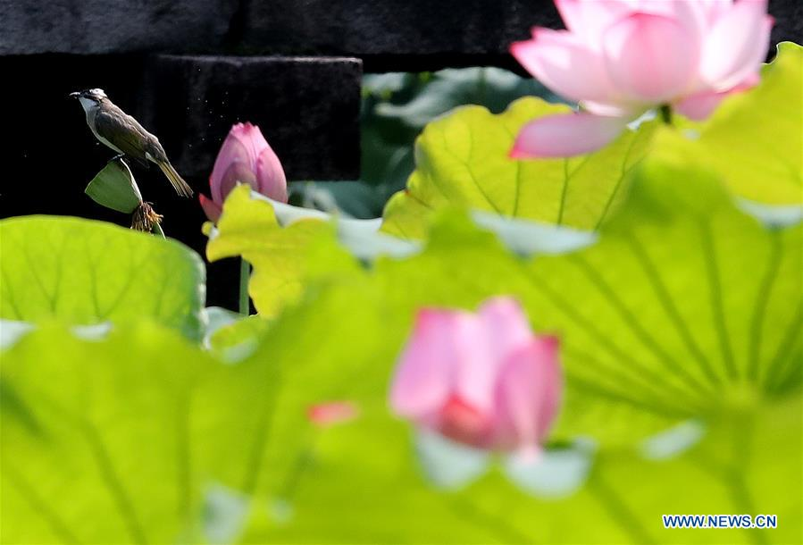 Lotus Flower Festival Kicks Off In Suzhou 3 Peoples Daily Online