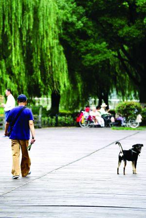 南京一年发生养狗纠纷近万起多数人赞成违规养犬和个人诚信挂钩