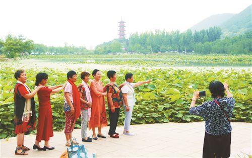 徐州不少公园荷花盛开吸引游客观赏美景
