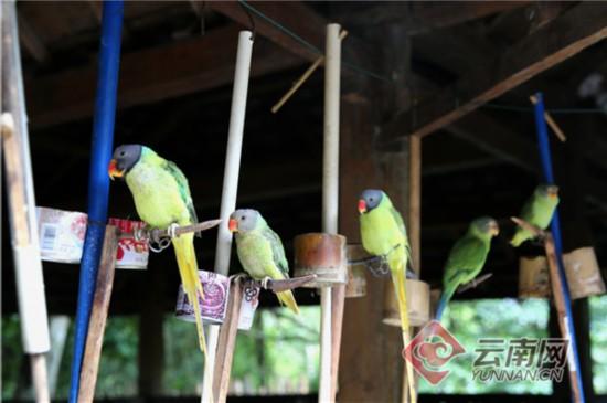 云南警方查获71只非法饲养的野生鹦鹉 16名涉案人员被立案调查