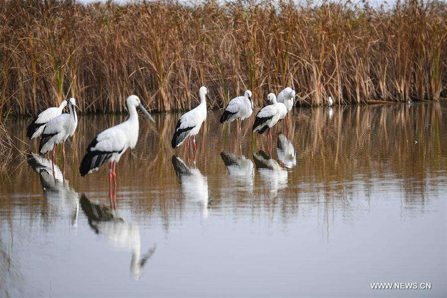 CHINA-MIGRATORY BIRD SANCTUARIES-UNESCO-WORLD HERITAGE LIST (CN)