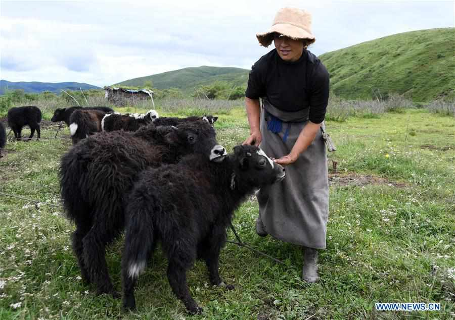 CHINA-SICHUAN-POVERTY ALLEVIATION-YAK-INDUSTRY (CN)