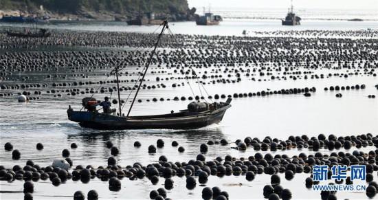 辽宁长海:海洋牧场收获忙