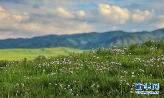 (图文互动)(4)原子城:鲜花开满草原