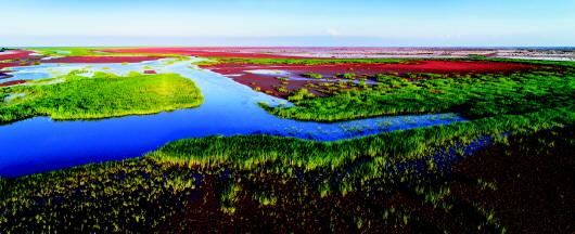黄河入海口,那片湿地那座城