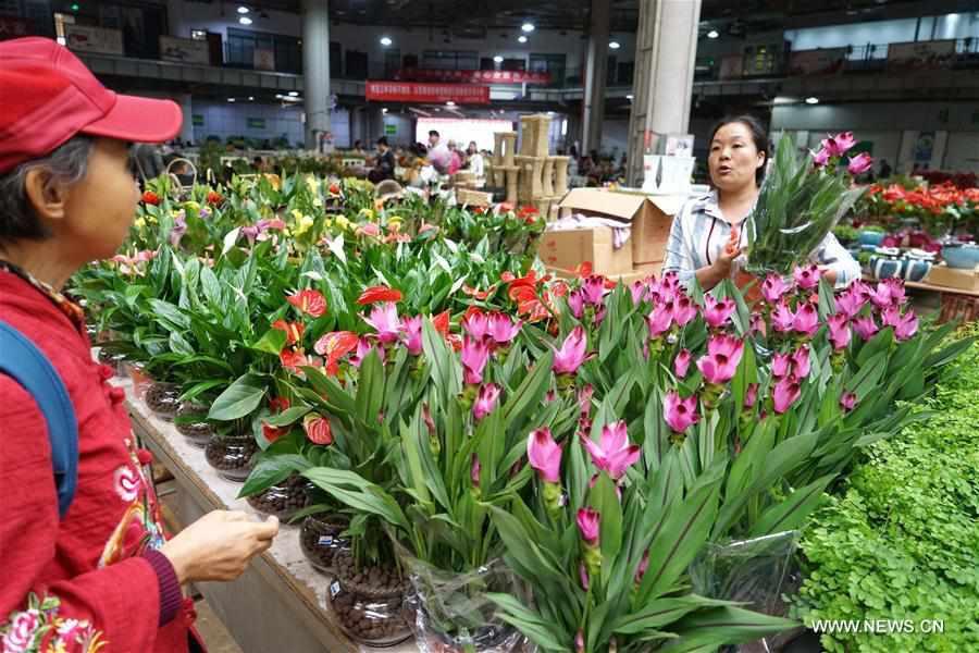 CHINA-KUNMING-INTERNATIONAL FLOWER EXPO (CN)