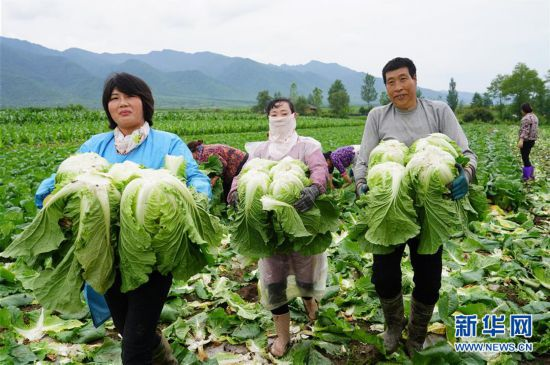 (经济)(1)陕西太白:高山反季节种菜助增收