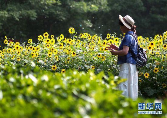 (社会)(1)上海:暂别阴雨 游人赏花