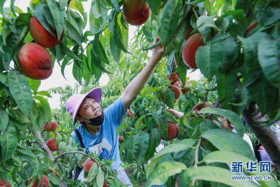 (經濟)(1)特色農業助農增收