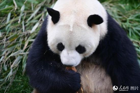 西宁熊猫馆 城市新名片【4】