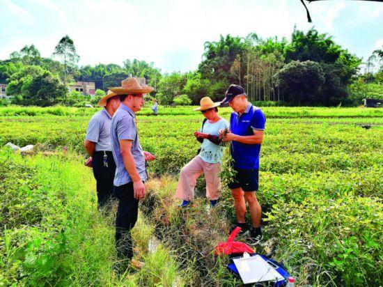 农技人员开展土壤墒情监测。  惠州日报记者陈春惠 摄