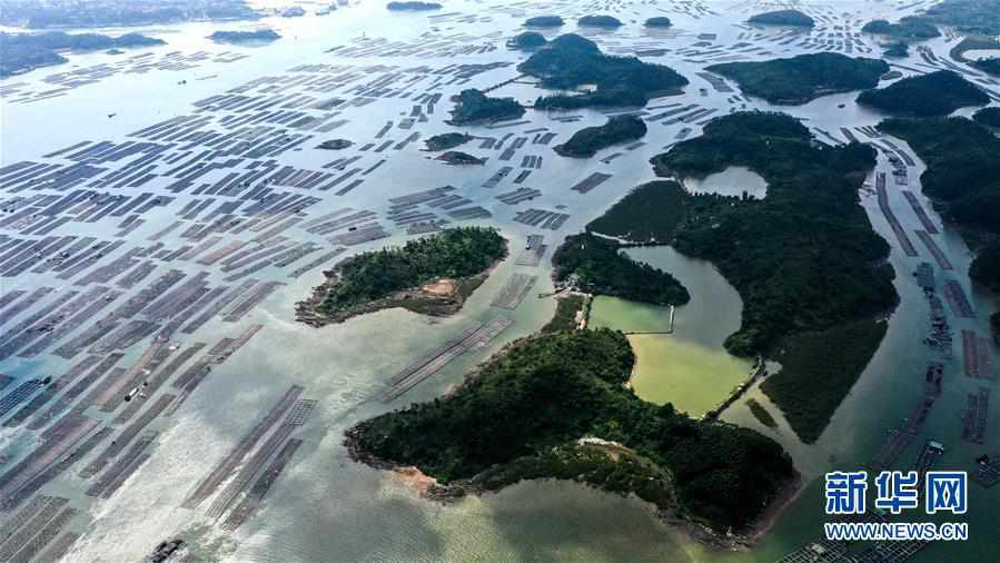 """(经济)(5)广西钦州建海洋牧场 打造生态""""蓝色粮仓"""""""