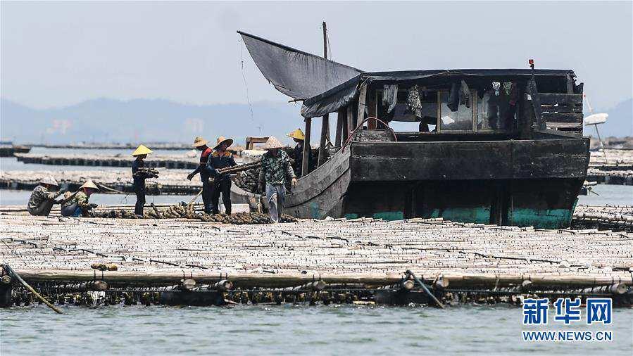 """(经济)(4)广西钦州建海洋牧场 打造生态""""蓝色粮仓"""""""