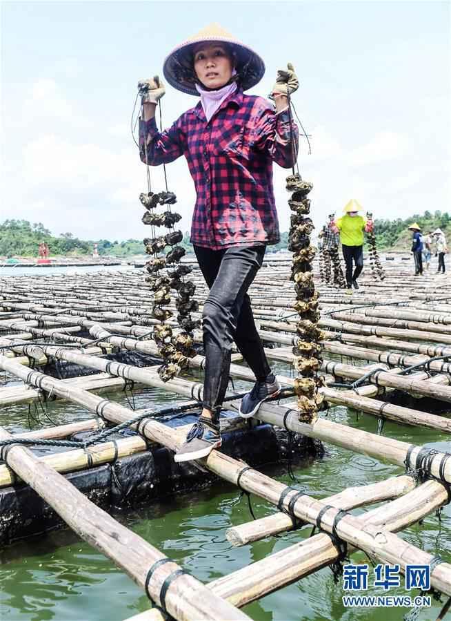 """(经济)(1)广西钦州建海洋牧场 打造生态""""蓝色粮仓"""""""