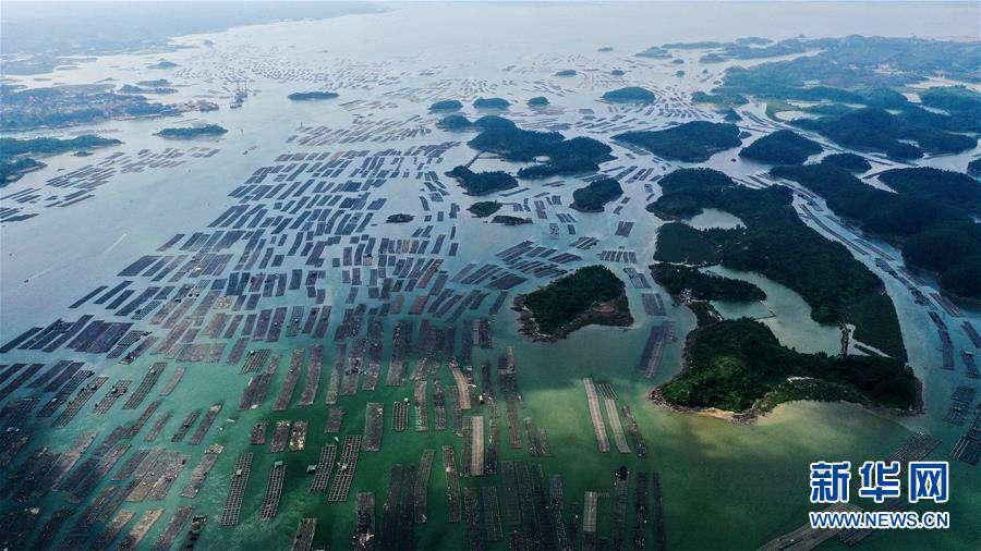 """(经济)(6)广西钦州建海洋牧场 打造生态""""蓝色粮仓"""""""
