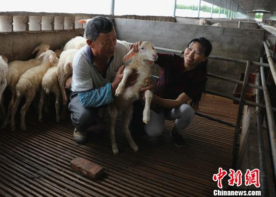 """浙江""""湖羊之乡""""的致富路循环农"""