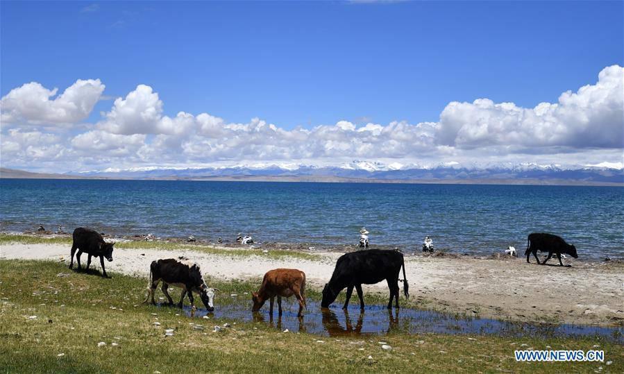 CHINA-TIBET-LHASA-MAPAM YUMCO LAKE-SCENERY (CN)