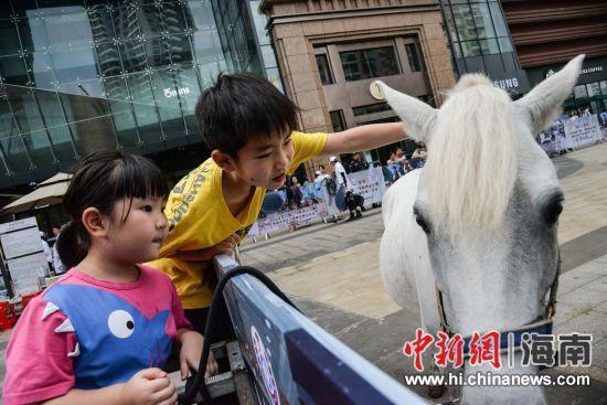 图为孩子与马近距离接触。