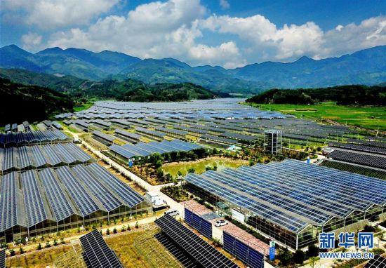 福建政和:现代光伏农业助力山区农民脱贫致富