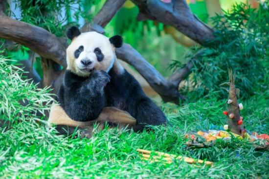 被萌化!30组三胞胎与大熊猫三胞胎同庆五岁生日