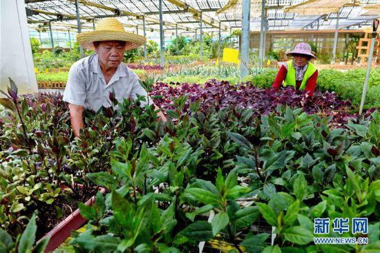 (社会)(3)福建政和:现代光伏农业助力山区农民脱贫致富