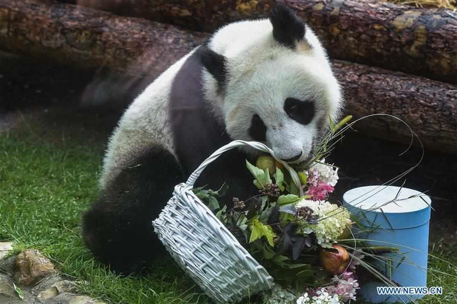 Moscow Zoo celebrates birthday for giant pandas Ding Ding, Ru Yi
