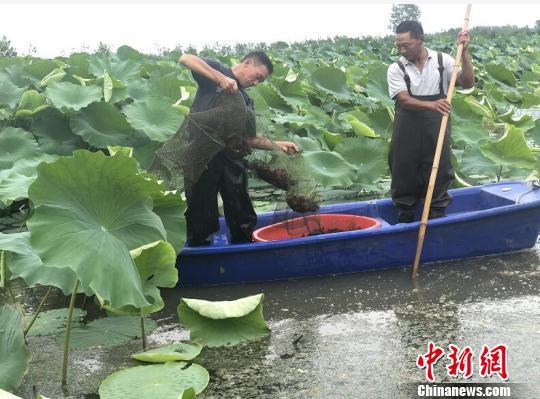 """江苏泗洪:""""家门口""""就业让村民分享产业红利"""