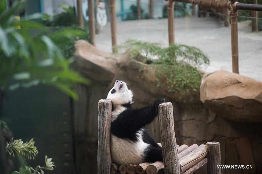 2nd giant panda cub named Yi Yi, marking close China-Malaysia friendship