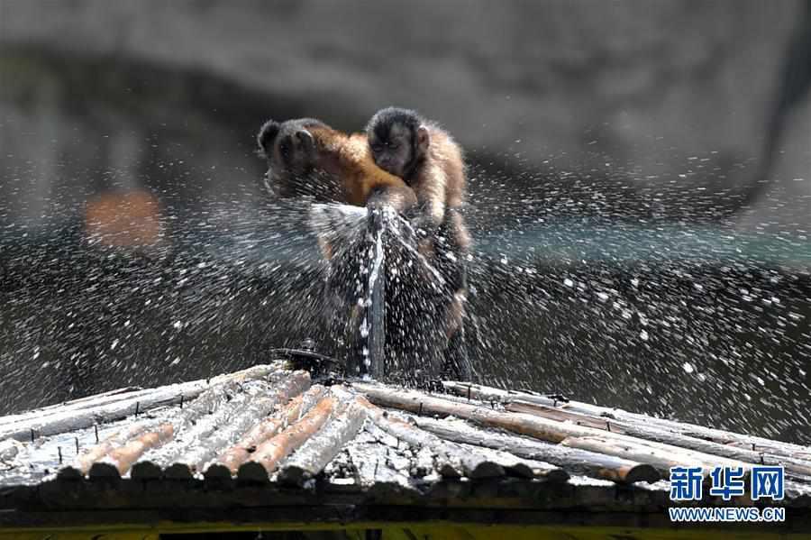 (社会)(1)动物避暑享清凉