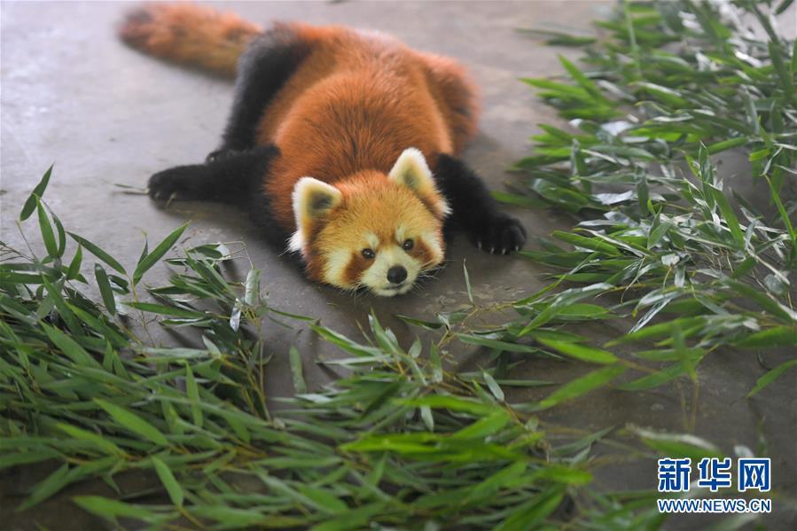 (社會)(3)動物避暑享清涼