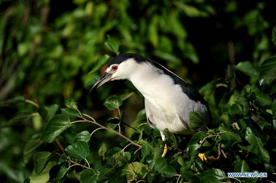 CHINA-SHANGHAI-ZOO-BIRD (CN)