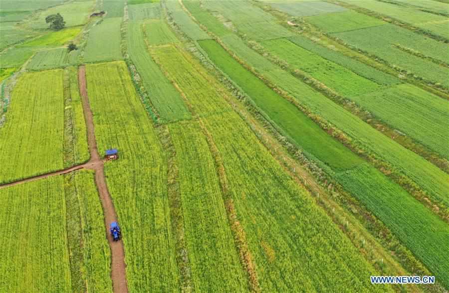 Rural complex opens in Zhanhai, China's Hebei