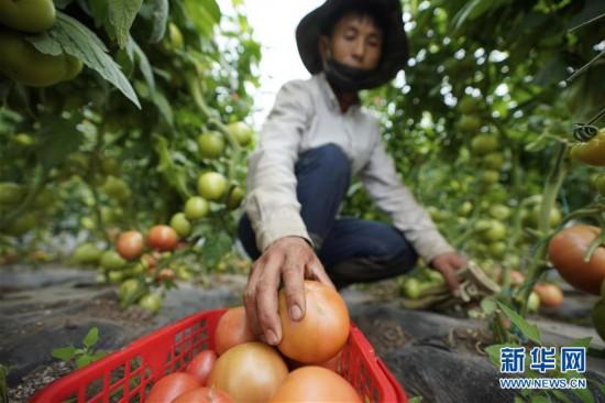 (经济)(5)坝上张北:全域旅游富万家