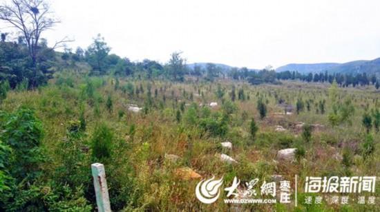 抢抓时机!滕州实施雨季造林2500余亩(图)