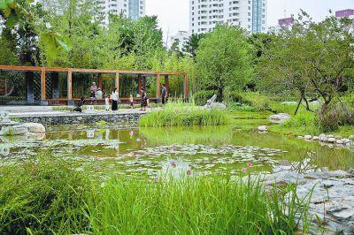 北京首个小微湿地保护修复项目落成 家门口可感受自然野趣